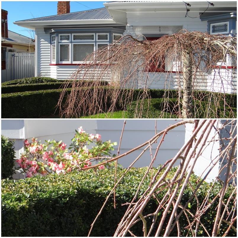 Kingsford Avenue, Bungalow Garden